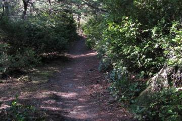 A shot of the trail going west from the county road on Bayocean Spit to the ocean.