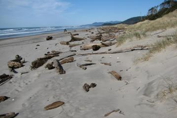 Most of the driftwood seen, on mile 287, was deposited during the winter of 2009-10.  The photo is included here because this mile is accessed to get to mile 288.