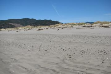 This view toward the northeast shows the dune areas along mile 288.  Note the general cleanliness of the beach and relative lack of driftwood compared to mile 287.