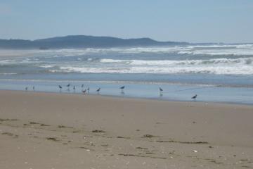 Shorebirds on Mile 129