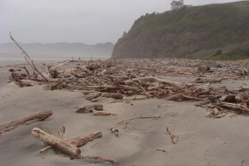Large deposit of logs and other tree debris just south of Nestucca River mouth.
