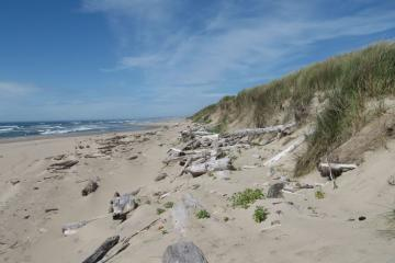Mile 129 showing driftwood and foredunes.