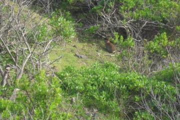 Rabbit in brush on west bank of highway 101