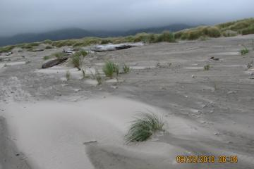 Here one can see the sprouts of new dunes, as the dunes slowly spread toward the beach.  Encroachment is slow.