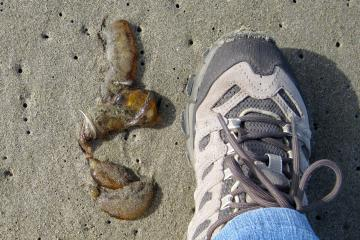 Several small brown jellies seen on mile 153