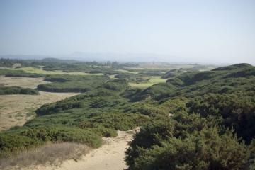 View looking south from the top of the bluff above Whisky Run. Lots of gorse. The light green patches are fairways and greens of Bandon Trails and Pacific Dunes golf courses.