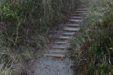 Steps carved into foredune show evidence of considerable use.