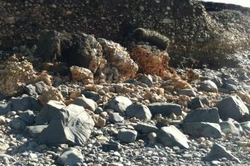 Mud, rocks and vegetation from bluff above Searose Beach