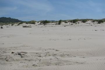 This shot indicates how little debris there was and how clean the dune area appeared.