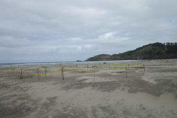 Biologists and authorities dug a pit and buried the charred remnants of the invasive species that were clinging to the Japanese dock. Here, the pit is cordoned off with 'Caution' tape.