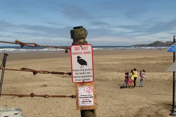 """These """"Do Not Disturb the Birds"""" signs are a welcome addition at major beach access locations.  It remains to be seen whether they will change peoples' behavior"""