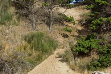 lots of tracks going up and down the sand slide to the top of the bluff