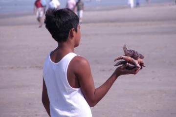 Boy collecting seastars on Nye Beach.  There isn't much rocky intertidal habitat along Nye Beach, but enough to attract visitors who don't necessarily know about tide pool etiquette.