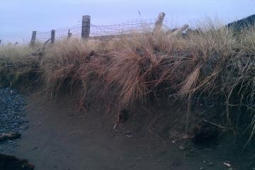 This is a spot that appears to be eroding away, and is located just below a fence row.