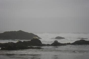 3 seals on the rock, 3 in the surf
