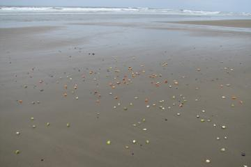 Someone apparently scattered an offering to Neptune of old cut-up fruit. The gulls and crows were definitely not interested.