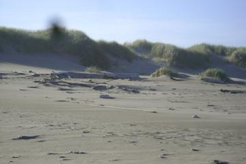 Considerably less driftwood against dunes than last month