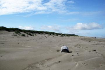 Sand filled in foredune areas