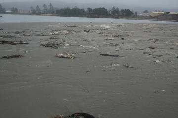 Debris on beach