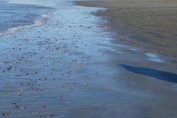 Many pebbles on beach.