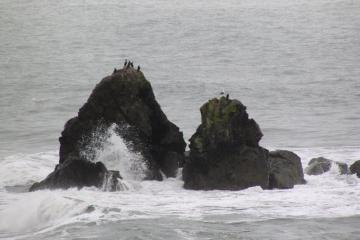 Cormorants on Rock middle of mile 2
