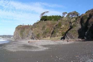 wind swept trees on cliff at sporthaven beach