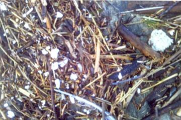 lots of debris like this on the beach today, twigs, feathers, piles of wood. Sadly, the white blurry spots are mostly tiny pieces of Styrofoam.. lots and lots of them!
