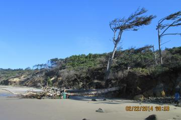 These two trees uprooted and fell on the beach last month during the storms.