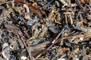 Close up of the debris.