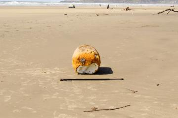 """Side view of large styrofoam float washed up on Nye Beach, which may or may not be tsunami debris. Yaquina Head in background. Length of walking stick 51"""" (130 cm)."""