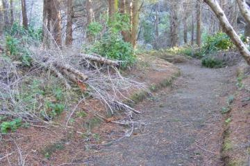 Trail with downed trees and branches in spots.