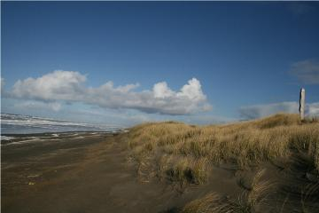 This is beach to foredune profile from near middle of mile 90 looking N.