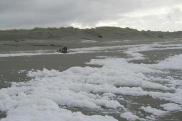 This is example of very white and thick frothy foam on beach. I guess this may be typical when storms are coming in.
