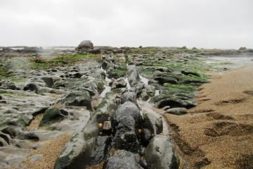 Kelp beds and rock formations and coarse sand at low tide