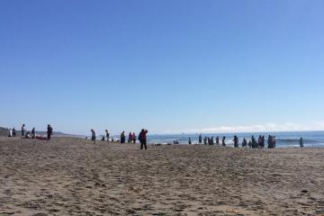 Went back to check my mile and ophir rest area for sea lion pup and the was a large group of people there for what looked like a Renaissance Festival on the beach. No sea lion pup found and I was glad not to see it with all of the people.