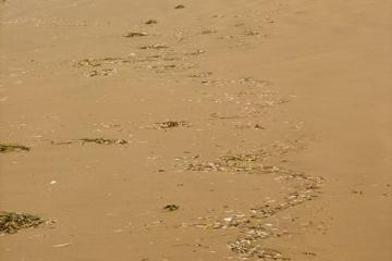 The sinuous swash line visible in this photo was composed of marine vegetation and thousands of small feathers.