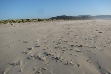 This shot shows the density of dried kelp and small rocks on the beach this day.