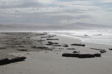 Big storms brought in way more driftwood than usual to Mile 202. Logs and stumps of various sizes were seen up on the beach as well as floating in the surf.