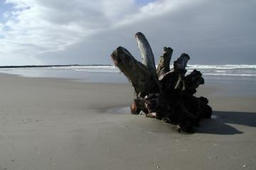 Large wood debris washed ashore recently
