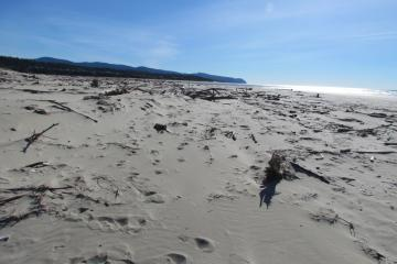 A beautiful day on the Bayshore near Waldport, OR. Shot looking southwards towards Alsea Bay outlet to ocean. Lots of driftwood near spit.