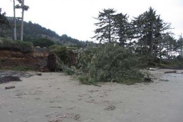 Tree has fallen town the bluff off Ocean View Drive.