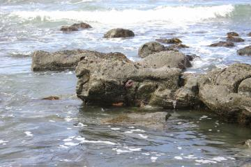Photo of some of the sea stars observed on this date