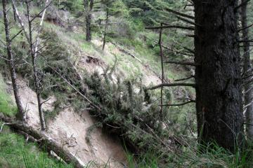 """New trees down in slide"""" """"Directly south of beach access trail"""