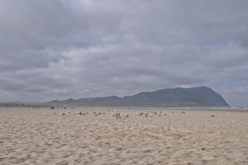 Gulls rest on the beach