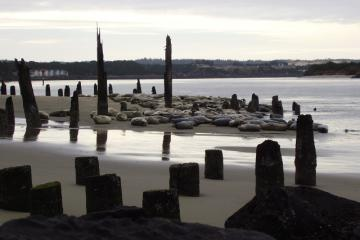 seal beach,siuslaw river bank