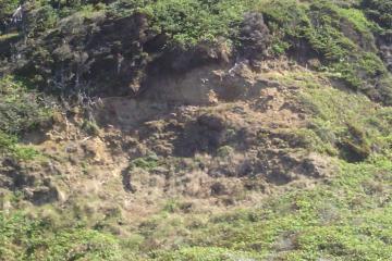 Patch of soil slippage