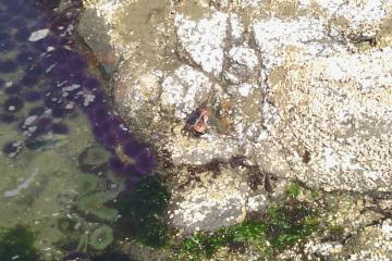 Urchins and crab on rocks