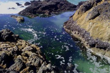 sea grass in tidal pool/channel