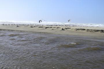 Standing waves in Spencer Creek due to small dunes in creek. Note large number of gulls socializing between the creek and shoreline.