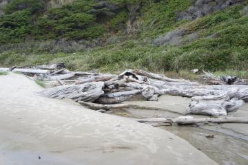 Driftwood found only at vegetation line.